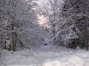 snow-my-yard.jpg