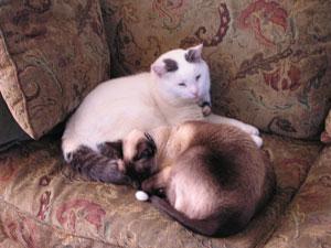 snuggle-with-a-friend.jpg