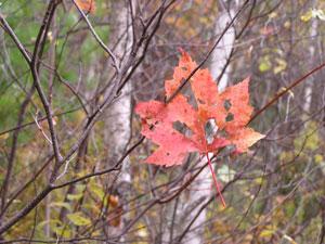 Fall200424