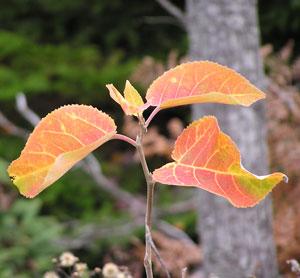 Fall200428