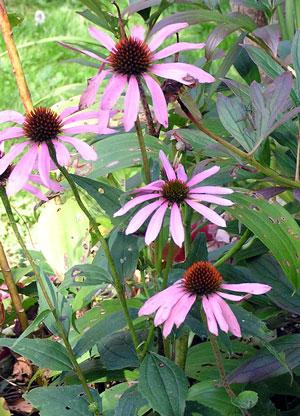 Gardenfall20041
