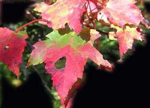 Gardenfall20046